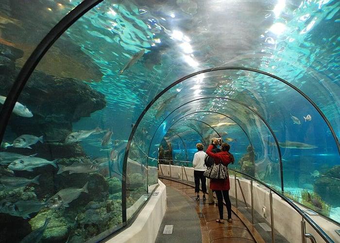 Singapore Malaysia Hongkong Packages   Kesari Tours
