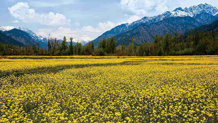 Kesari's Jammu Kashmir Travel Packages| Kashmir Tours